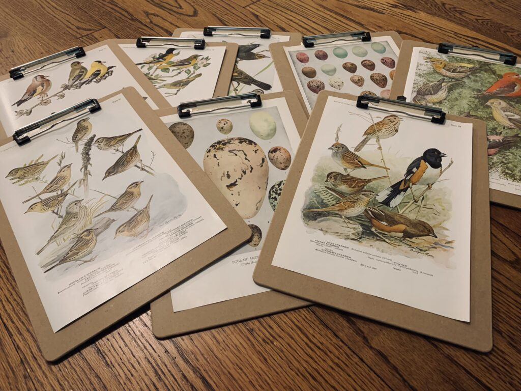 Bird book paintings on clipboards