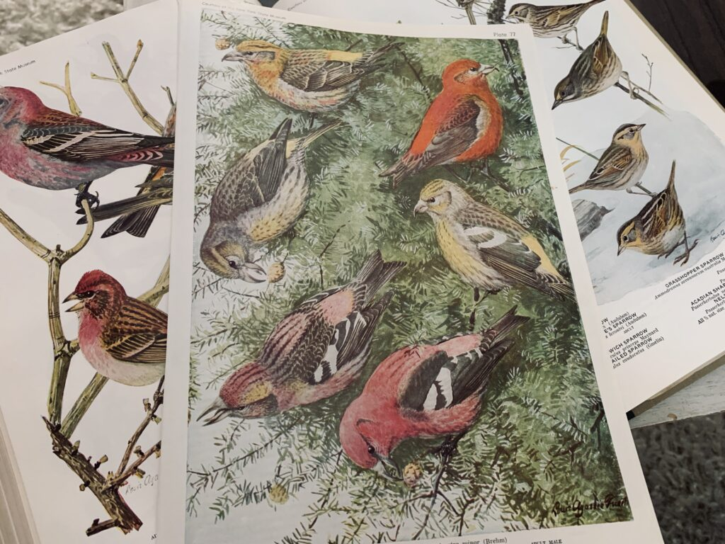 Bird book pages