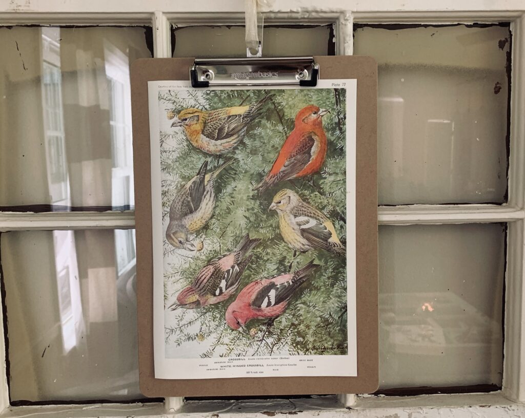 Bird book page framed on a clipboard