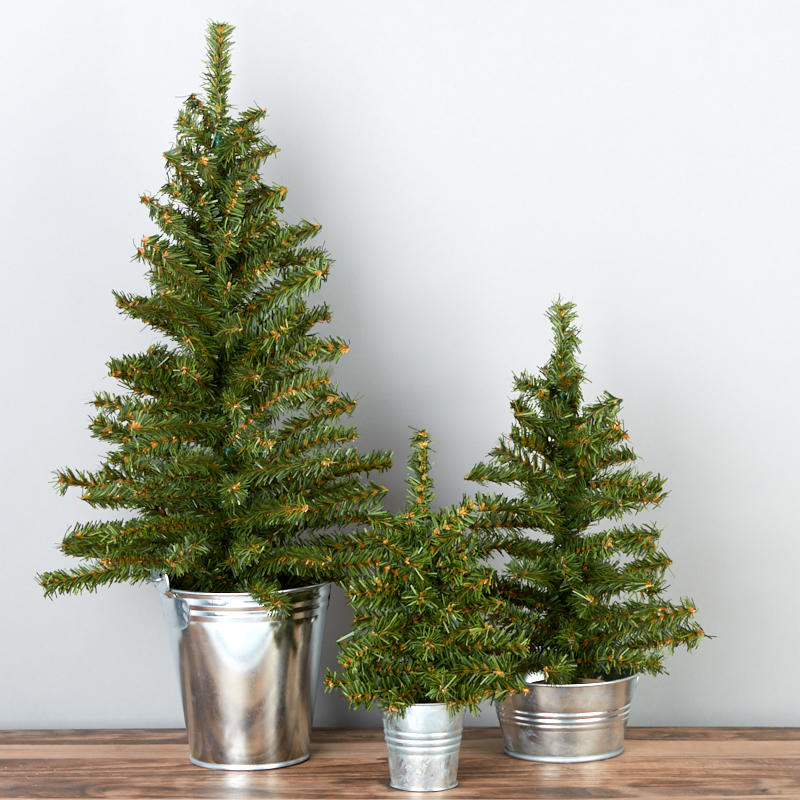 Pine trees in galvanized buckets